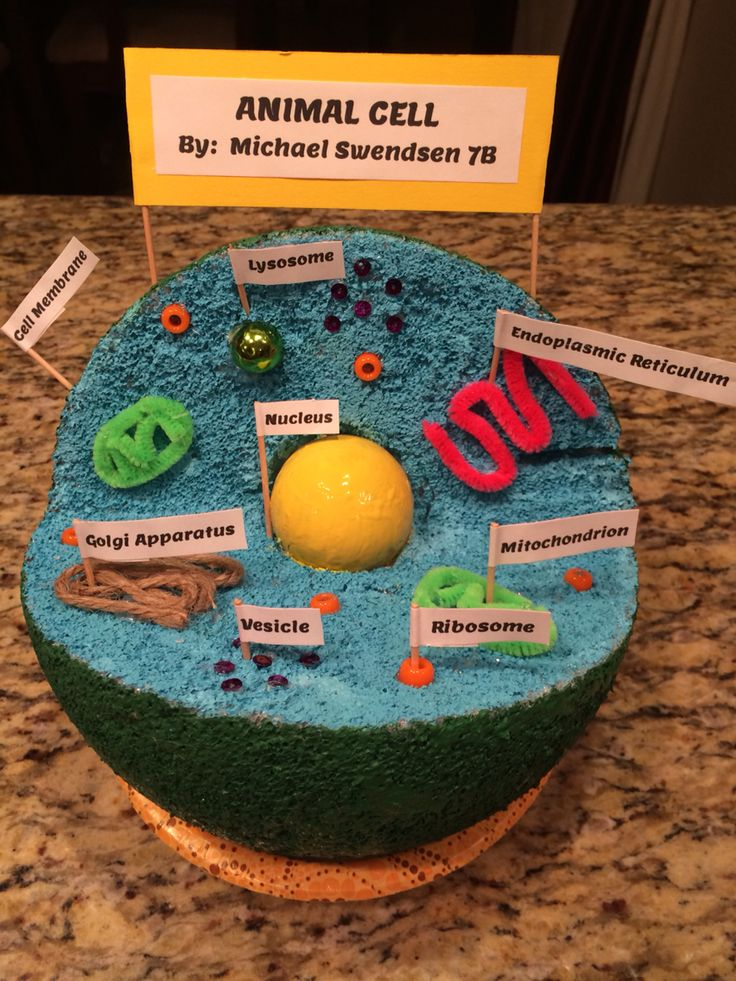 Build A Model Of A Cell